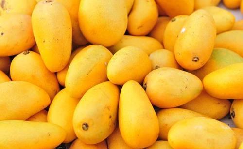 'மா'வைக் காக்க அற்புத இயற்கை வேளாண்மை வழிமுறைகள்