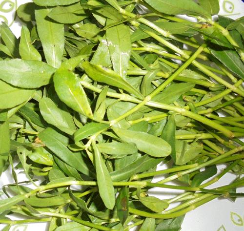 பொன்னாங்கண்ணி ரசம்